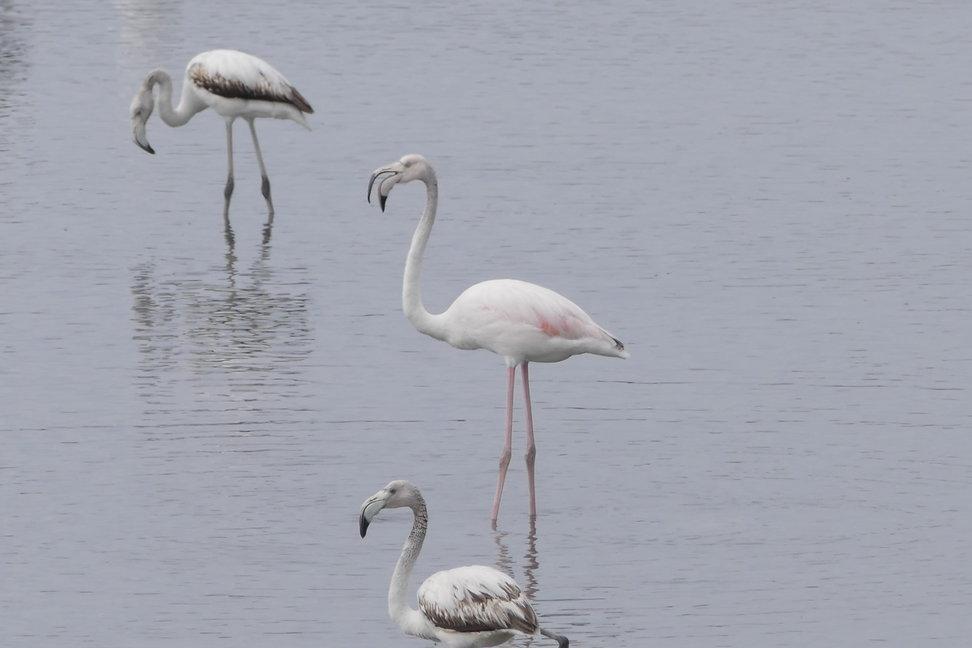 Spring Birding Tour (Bulgaria & Greece)