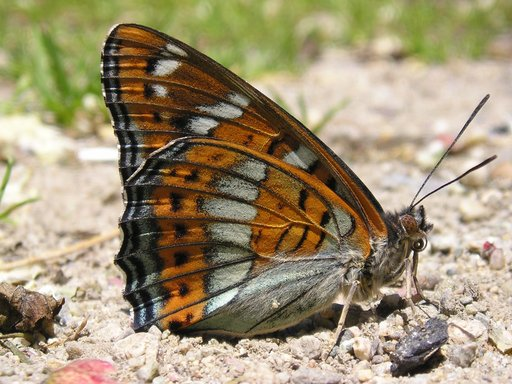 July Butterfly Tour (Bulgaria)