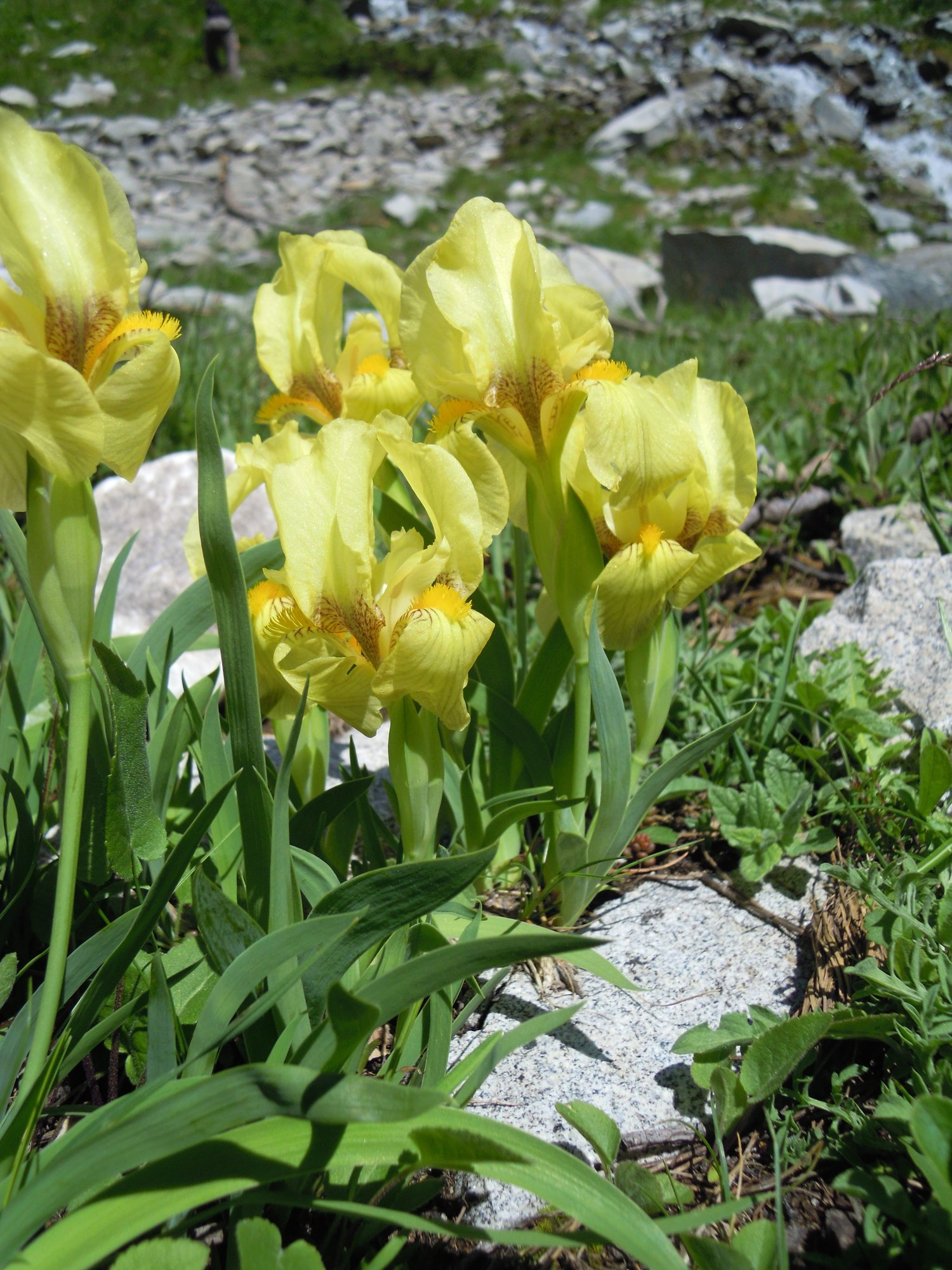 Mountain Botanist Tour (Bulgaria)