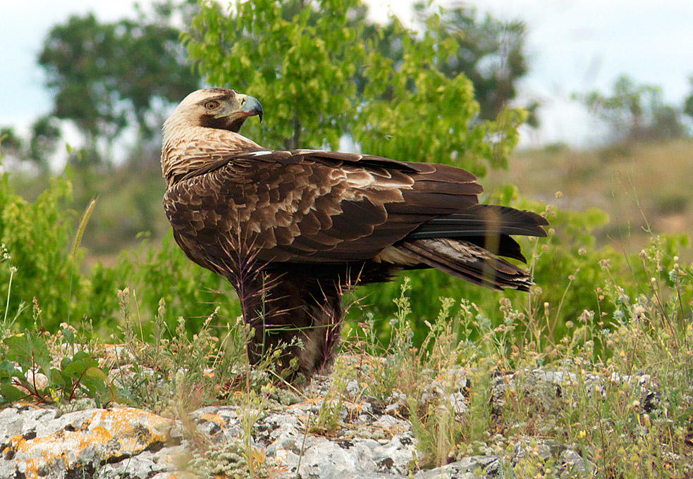 Spring Birding Tour (Bulgaria)