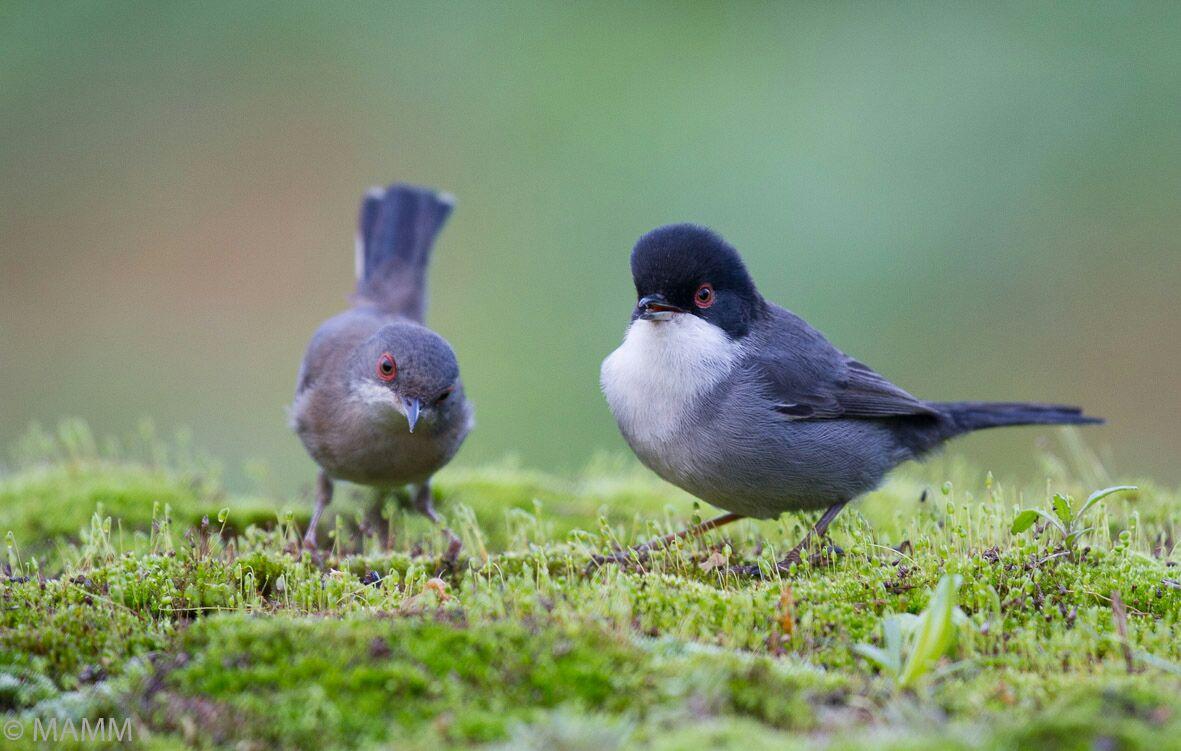 Dream Birding in South-West Spain  -NEW-