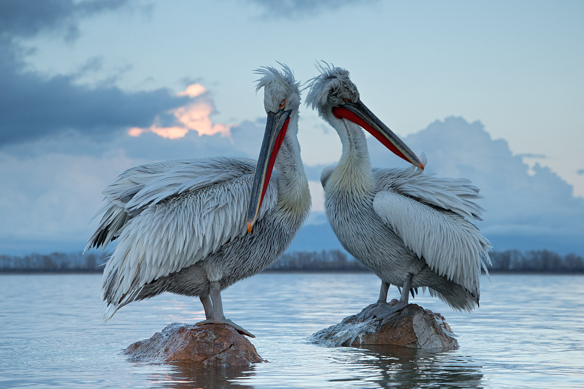 Pelicans & Large Birds of Prey Photography (Bulgaria & Greece) -NEW-