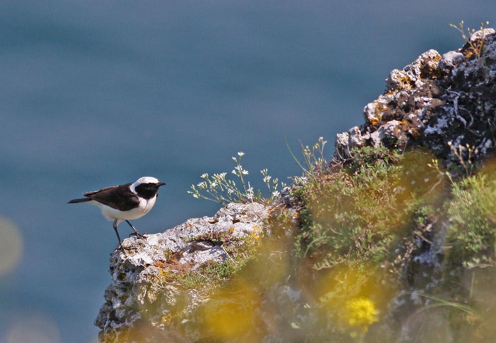 Birds of Dobrudza and Northern Black-Sea Coast (Bulgaria)
